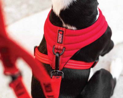 Kong Comfort harness  S Red